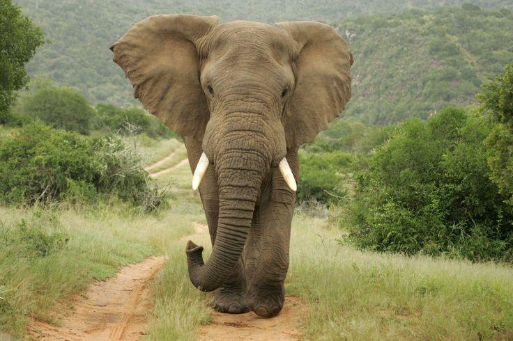 ¡A salvar a los elefantes!