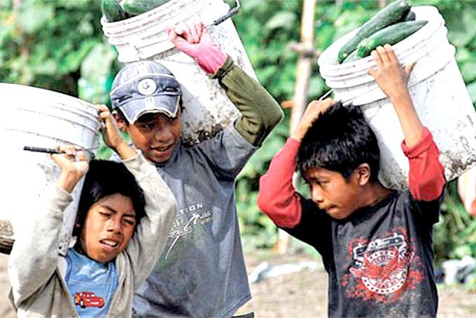 Combaten Trabajo Infantil En El Campo Sitquije