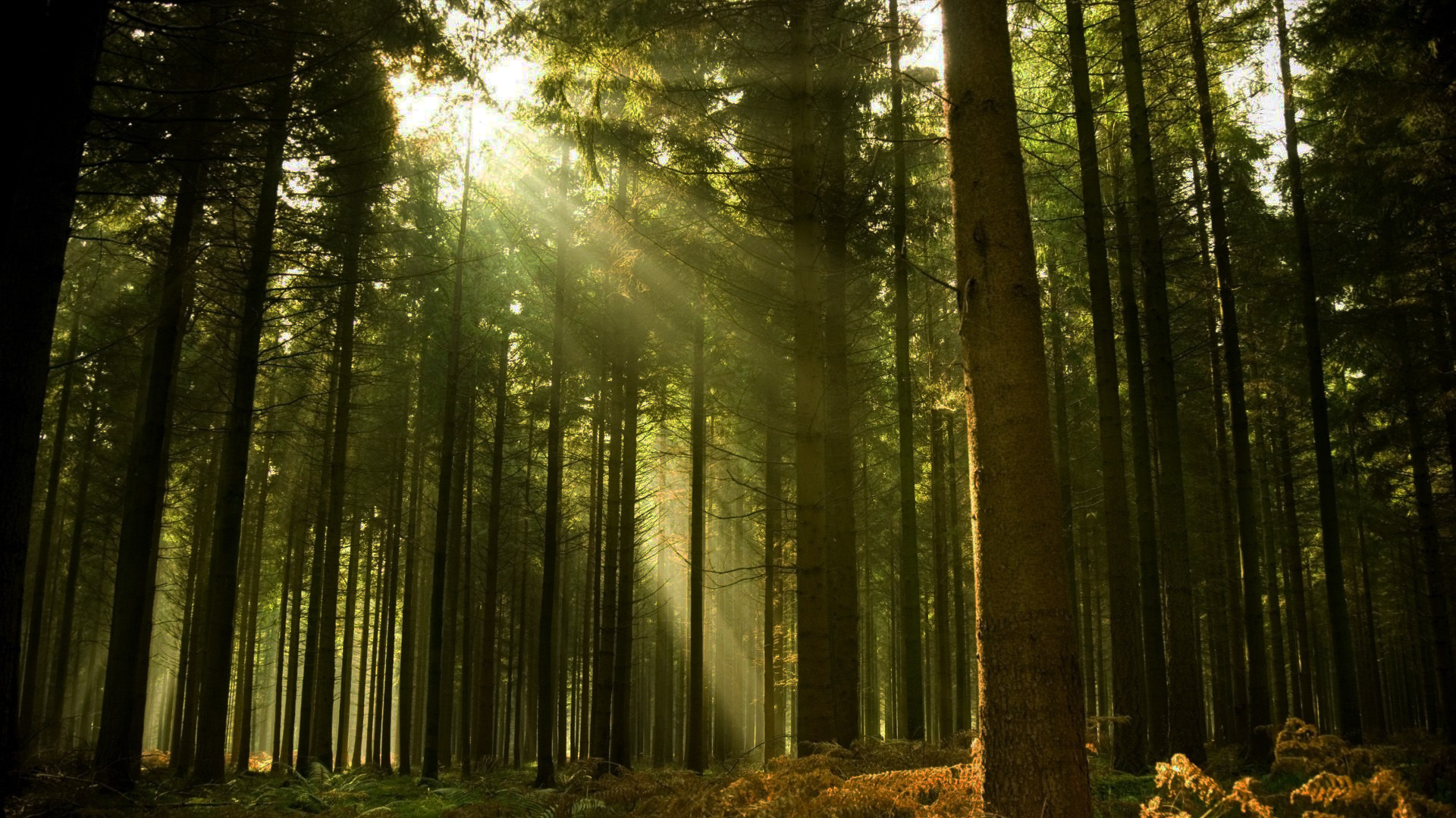Bosque De Tlalpan, A Categoría De Reserva De La Biosfera